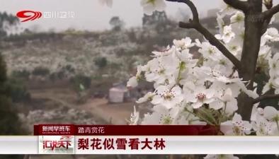 踏青賞花:梨花似雪看大林