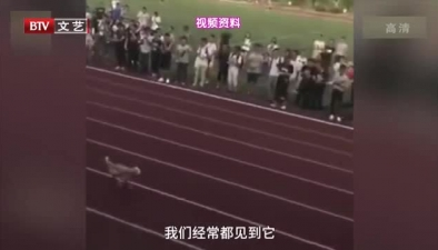 運動會接力賽 季軍竟是一只狗