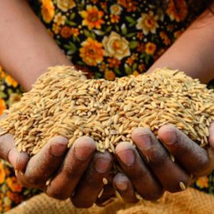 國際機構警告貿易保護主義威脅全球食品安全