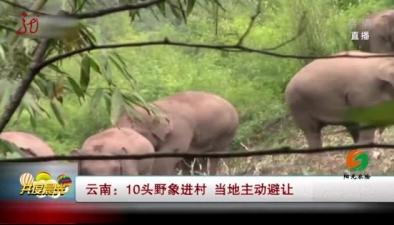 雲南:10頭野象進村 當地主動避讓