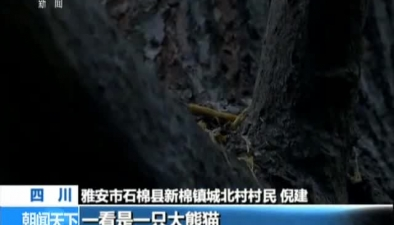四川:村民家中發現野生大熊貓