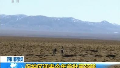 四川阿壩:保護區迎來今年首批黑頸鶴