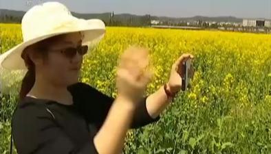 江西新余:兩千余畝油菜花競相綻放