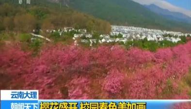 雲南大理:櫻花盛開 校園春色美如畫