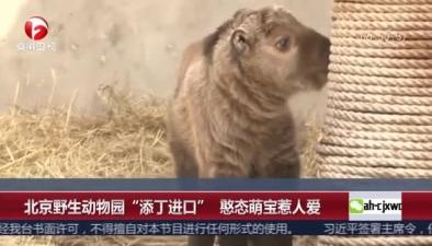 """北京野生動物園""""添丁進口"""" 憨態萌寶惹人愛"""