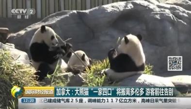 """加拿大:大熊貓""""一家四口""""將搬離多倫多 遊客前往告別"""