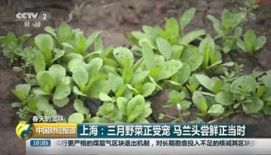 春天的滋味:上海三月野菜正受寵 馬蘭頭嘗鮮正當時