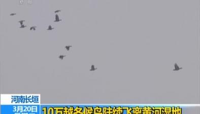 河南長垣:10萬越冬候鳥陸續飛離黃河濕地