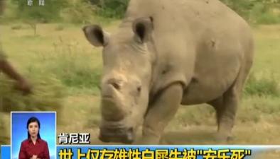 """肯尼亞:世上僅存雄性白犀牛被""""安樂死"""""""