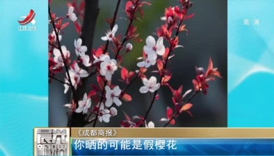 《成都商報》:你曬的可能是假櫻花