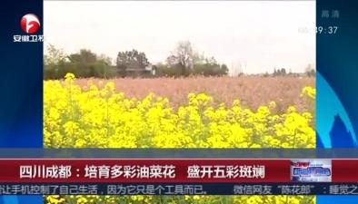 四川成都:培育多彩油菜花 盛開五彩斑斕