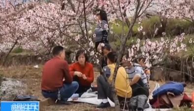 重慶開州:春風十裏桃花紅 粉色花海賞春光