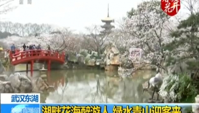 武漢東湖:湖畔花海醉遊人 綠水青山迎客來