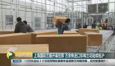 上海國際蘭展開幕在即 萬余株進口珍稀蘭花陸續抵滬