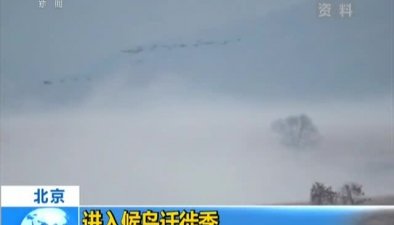 北京:進入候鳥遷徙季