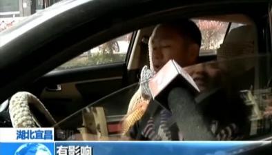 """湖北宜昌:""""低頭族""""司機頻現 交警監控抓拍"""