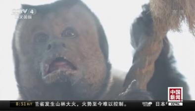 """天津:""""國字臉""""猴子走紅網絡 自帶表情包"""