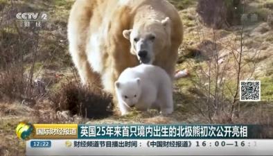 英國25年來首只境內出生的北極熊初次公開亮相