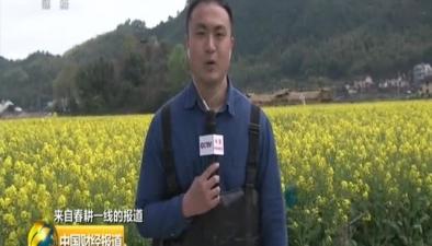 來自春耕一線的報道:浙江龍泉油稻輪作 農旅融合