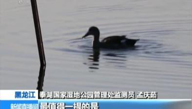 黑龍江:泰湖國家濕地候鳥回歸報春來