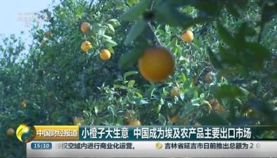 小橙子大生意 中國成為埃及農産品主要出口市場