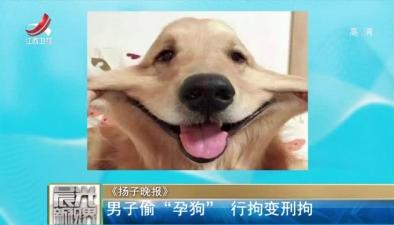 """《揚子晚報》:男子偷""""孕狗"""" 行拘變刑拘"""