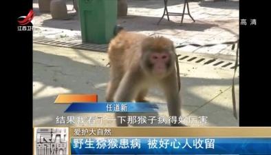 愛護大自然:野生獼猴患病 被好心人收留
