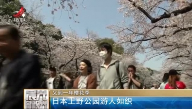又到一年櫻花季:日本上野公園遊人如織