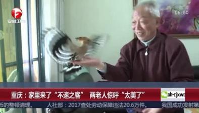 """重慶:家裏來了""""不速之客"""" 兩老人驚呼""""太美了"""""""