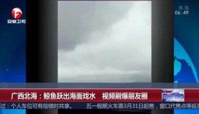 廣西北海:鯨魚躍出海面戲水 視頻刷爆朋友圈