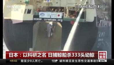 日本:以科研之名 日捕鯨船殺333頭幼鯨