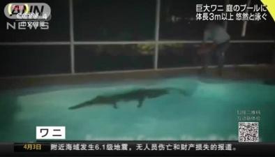 三米鱷魚夜闖民宅 嚇壞屋主人