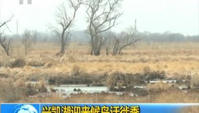 俄羅斯:興凱湖迎來候鳥遷徙季