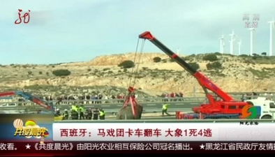 西班牙:馬戲團卡車翻車 大象1死4逃
