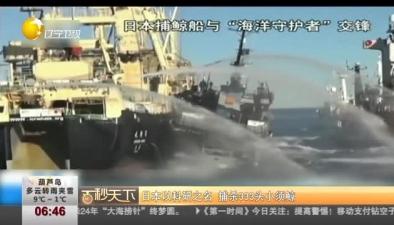 日本以科研之名 捕殺333頭小須鯨