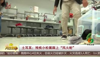 """土耳其:殘疾小松鼠踩上""""風火輪"""""""