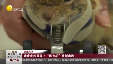 """身殘志堅:殘疾小松鼠踩上""""風火輪""""重新奔跑"""