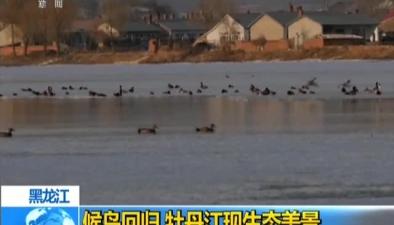黑龍江:候鳥回歸 牡丹江現生態美景