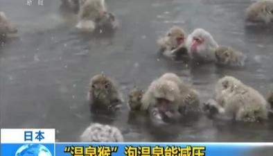 """日本:""""溫泉猴""""泡溫泉能減壓"""