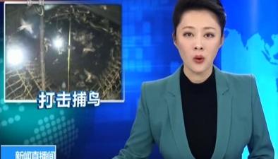湖南臨湘:破獲捕售野生鳥類大案