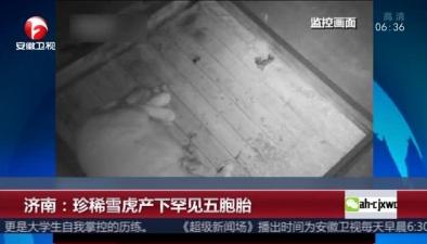 濟南:珍稀雪虎産下罕見五胞胎