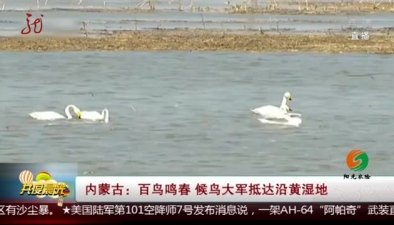 內蒙古:百鳥鳴春 候鳥大軍抵達沿黃濕地