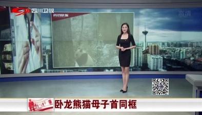 卧龙熊猫母子首同框