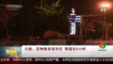 雲南:亞洲象夜闖市區 滯留近5小時