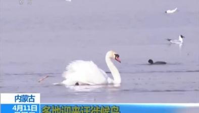 內蒙古:多地迎來遷徙候鳥