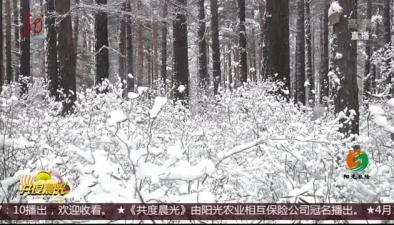 漠河:四月迎來暴雪 雪深達8厘米