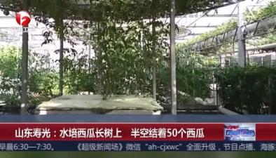山東壽光:水培西瓜長樹上 半空結著50個西瓜