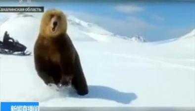 俄羅斯:挑釁!俄男子追熊取樂