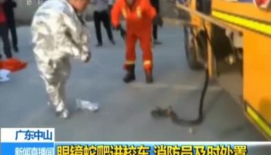 廣東中山:眼鏡蛇爬進校車 消防員及時處置
