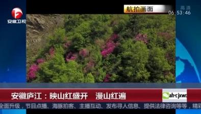 安徽廬江:映山紅盛開 漫山紅遍